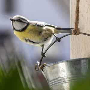Bird & Pet Care